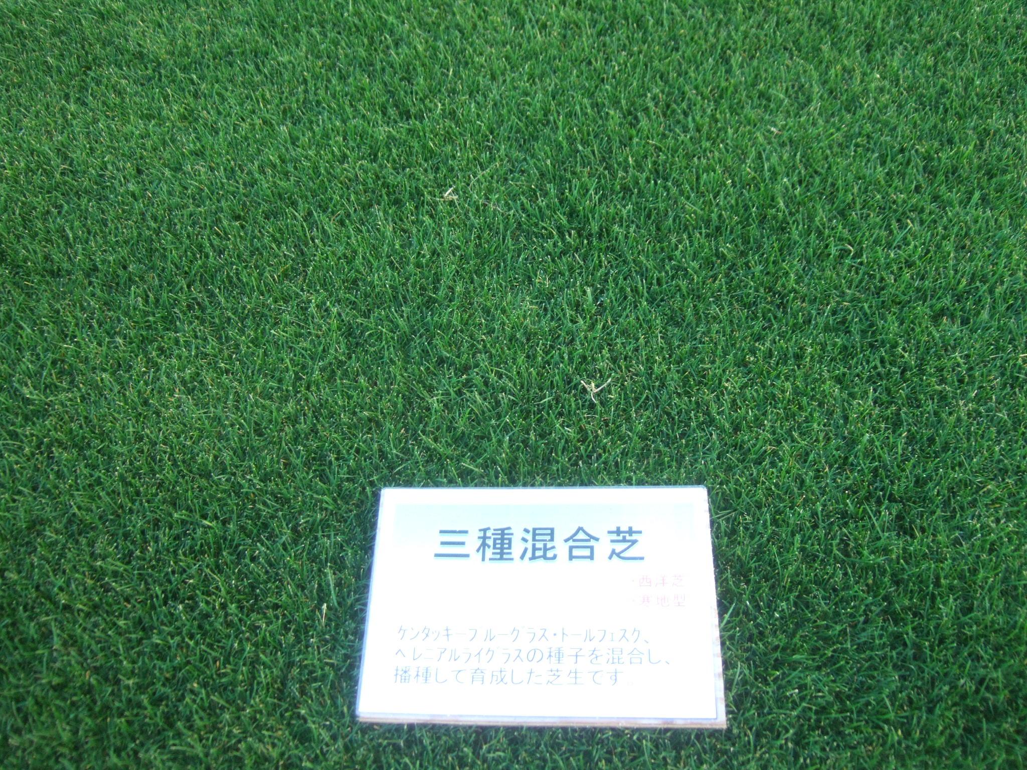 三種混合芝
